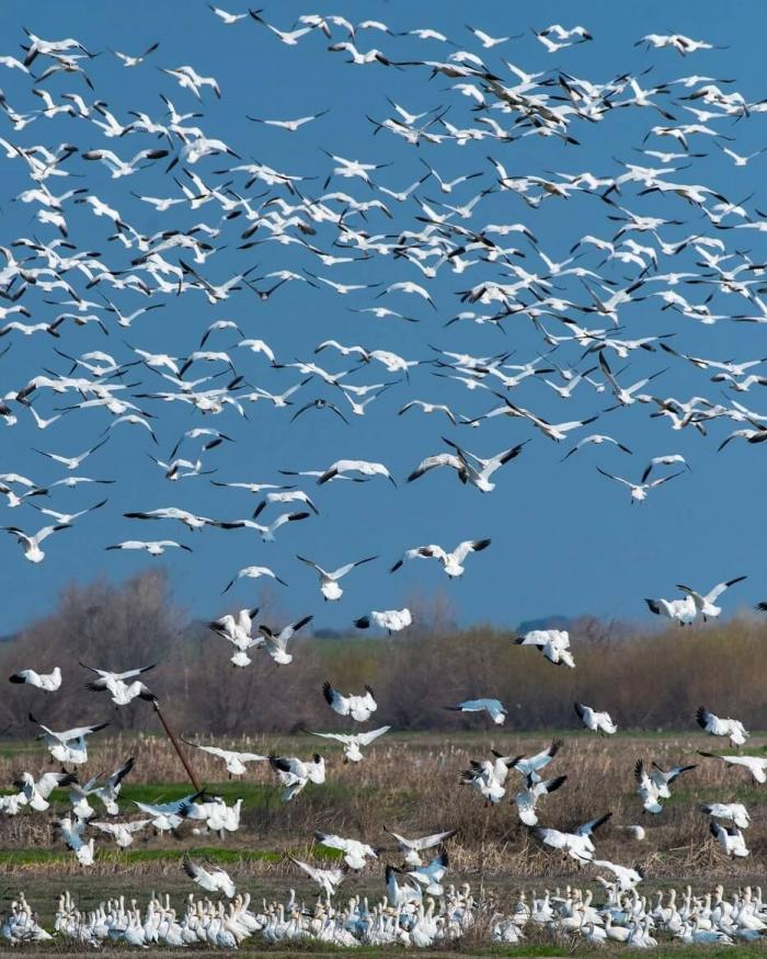Birds over wetlands